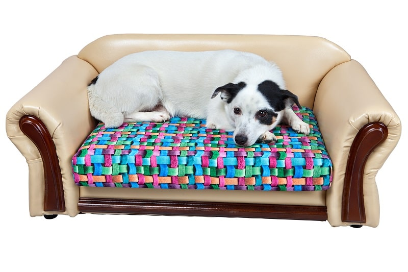 best couch cover for dogs