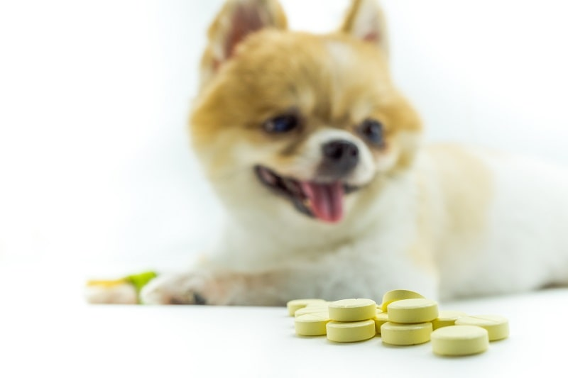 best dewormers for dogs