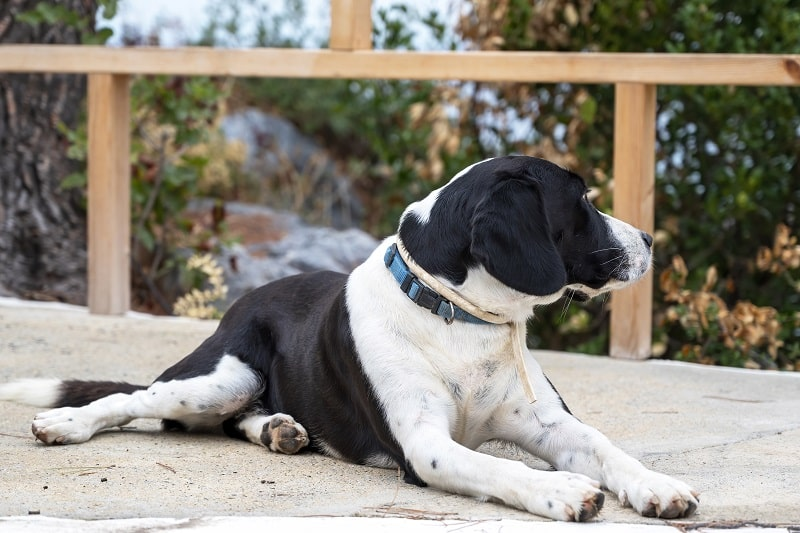 best electric fences for dogs