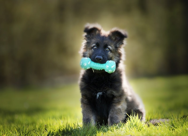 Best teething toys for dogs