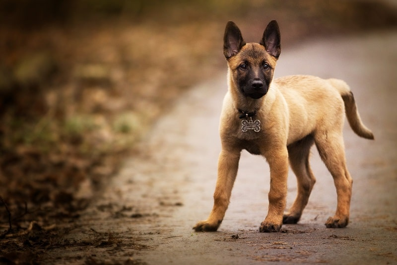 best GPS trackers for dogs