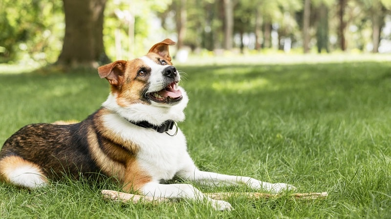 best calming treats for dogs